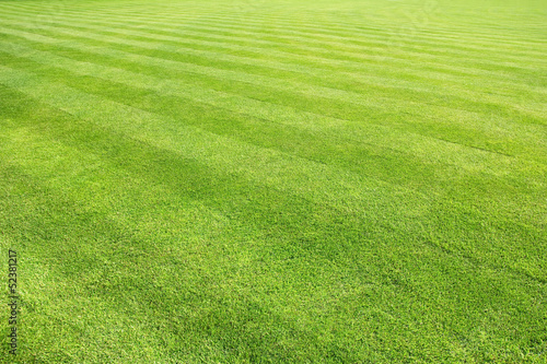 big lawn background