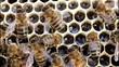 Bees convert nectar into hone