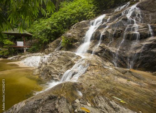 Fototapeten,baum,malaysia,foliage,natürlich