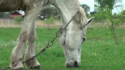 horse grazes in a meadow