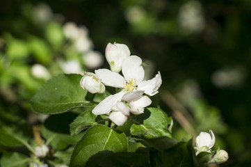 photo of blossoming tree brunch with white flowers on bokeh gree