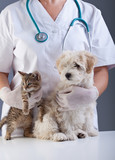 Fototapeta Animal doctor closeup with pets