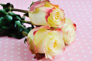 Three yellow-orange roses