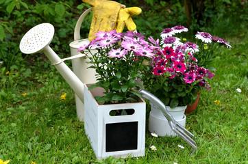 Frühling Garten Pflanzen Kanne