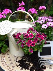Blumen im Frühling Garten