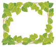 Vector  frame of green leaves.