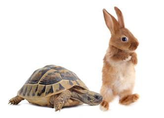 Tortoise and rabbit