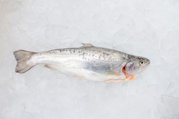 Pacific salmon on ice