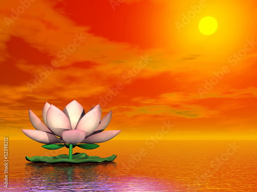 Lotus flower by sunset - 3D render