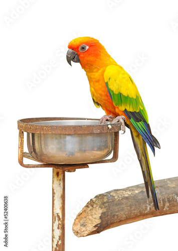 A colorful parrot