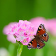 little pink flower and butterfly