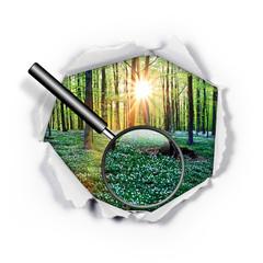 Papierloch - Wald - Lupe