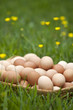 Basket of fresh brown eggs in grass