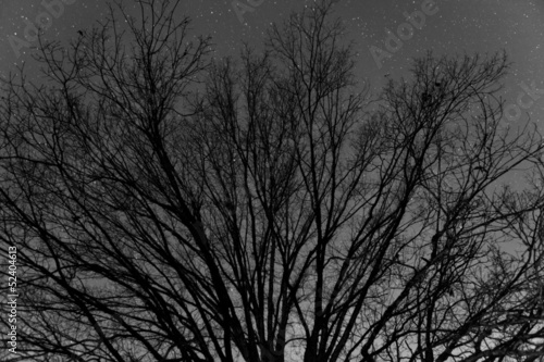 Bare tree branches against starry night sky