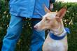 Spanish Podenco with owner