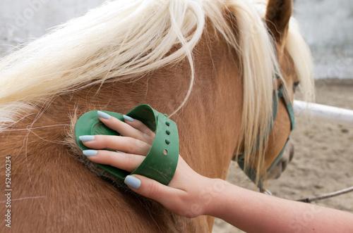 Foto op Plexiglas Paarden horse grooming
