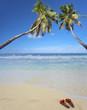 cocotiers jumeaux sur plage des Seychelles