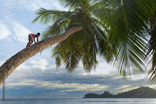 Fototapeten,seychelles,strand,coconut palm,kind