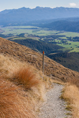 track to Mt Robert in Nelson Lakes National Park