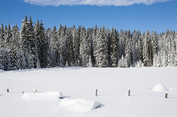Snow covered meadow with trees in the background
