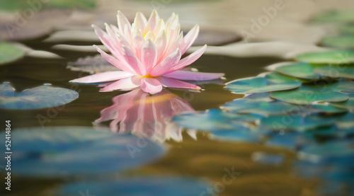 Aluminium Water planten ninfea fiore acquatico 9313