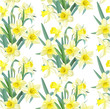 Seamless pattern lush yellow daffodils on white background