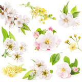 Collection of flowers of fruit trees isolated on white