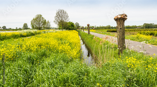 Typical Dutch landscape in springtime