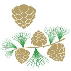 Pine cone. Larch tree