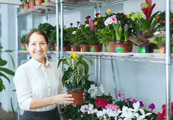 woman in flower shop with  Aphelandra