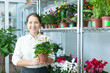 woman with  auricula (Primula) plant