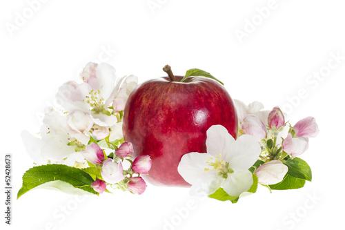 Fototapeten,äpfel,rot,blühen,blumenblatt
