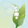 Spring flower lily of the valley