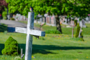 wooden white cross in a cemetary