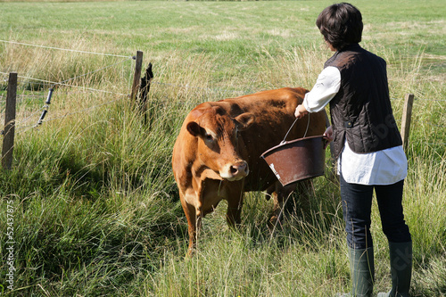 Farmer giving a cow some water to drink