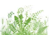 grüne Wiese - 52441002