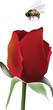 ape sulla rosa