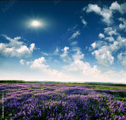 Lavender field at the end of the day