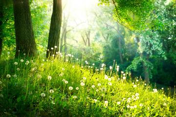 Wiosną przyroda. Piękny krajobraz. Zielona trawa i drzewa