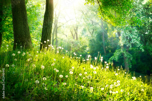 Poster Bossen Spring Nature. Beautiful Landscape. Green Grass and Trees