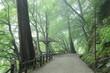 香嵐渓の新緑