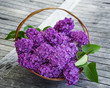 lilac in a basket on an old table