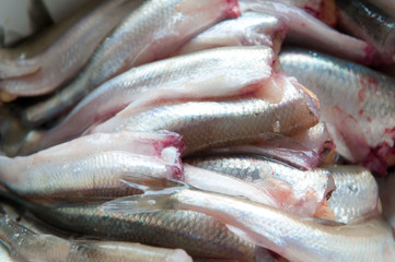 Raw Smelt Fish