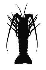HQ vector silhouette of crayfish isolated on white background.