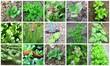 montage de jardinage