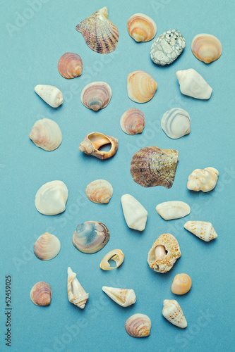 Collection of seashell over blue background