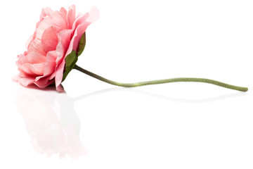 Artificial pink flower on white background with reflection