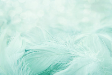 Soft fluffy feathers