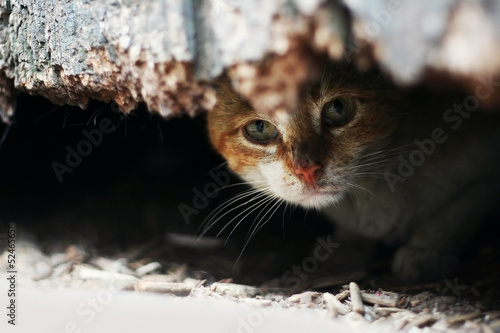Yard cat in abandoned house