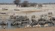 Wildlife gathering at a waterhole, Etosha National Park
